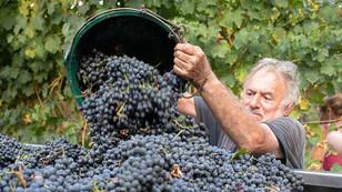 modena-balsamic-vinegar01.jpg