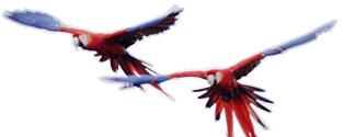 Observação de Aves em Bonito MS