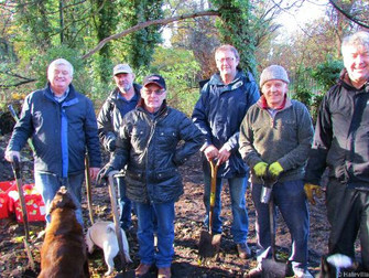 The Freemen Of Hale Plant Over 500 Daffodil Bulbs At The Freemens Copse