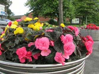 Floral Planters In Full Bloom At Ivy Farm Court Shops