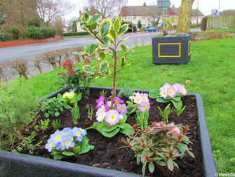 New Planters For The Curlender - Hale Park Estate