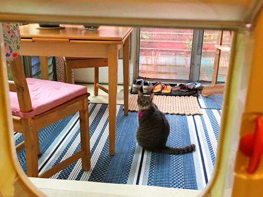 New Cat Door _^..^_