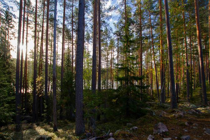 Repovedeltä_23092018_c_1920_x.jpg