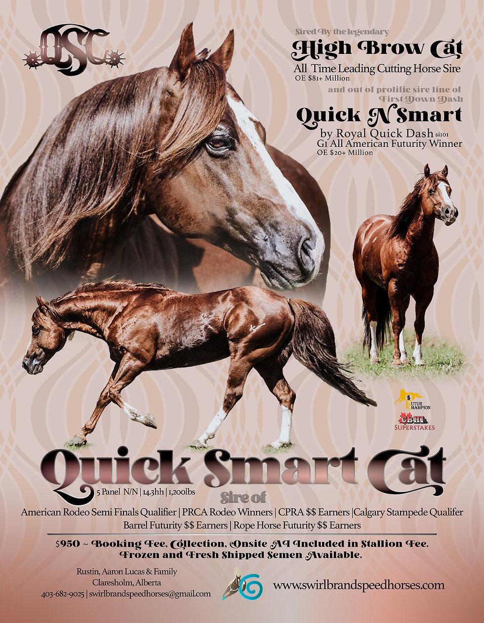 Quick Smart Cat.jpg