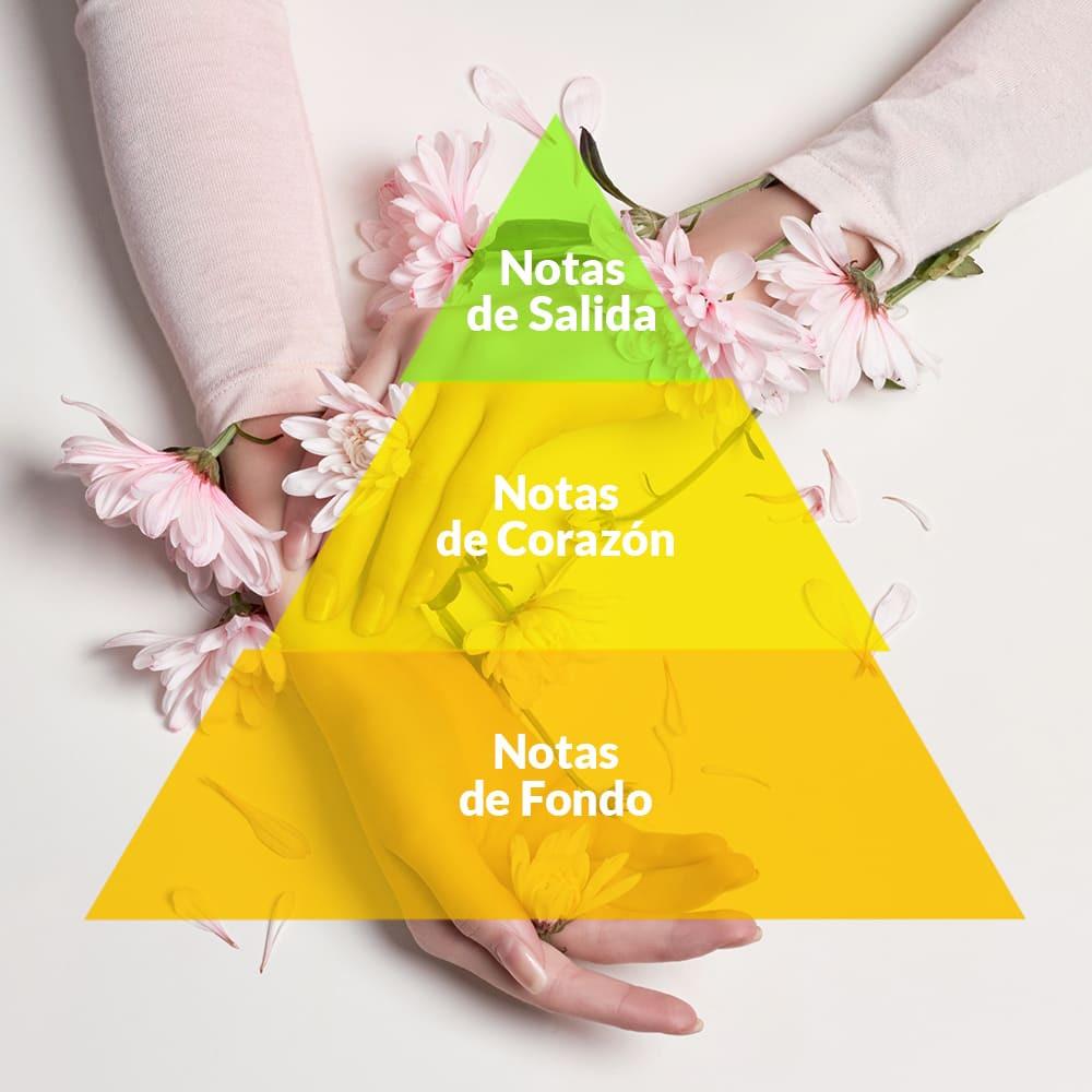 piramide-olfativa-e-notas-olfativas