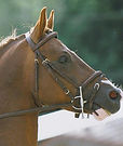 ecurie, ecurielamorlaye, lamorlaye, ecuriechantilly, chantilly, compétition, sport, chevaux, poney