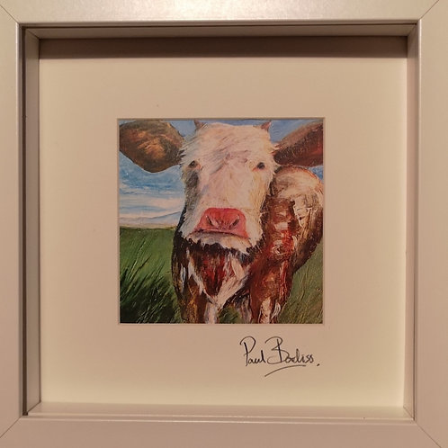 Framed print of 'Moody Cow'