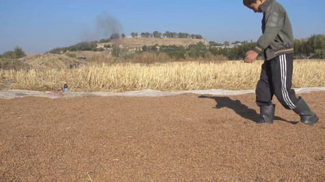 Rice Walkers
