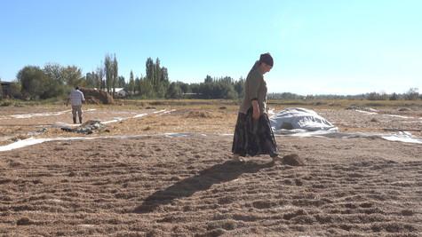 Woman Rice Walker