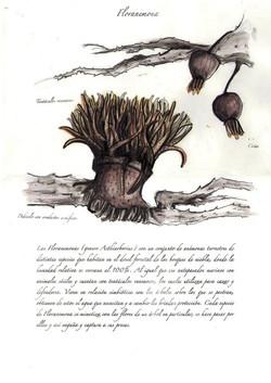 Floranemona
