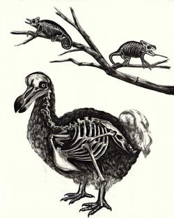 Naturaleza Muerta V
