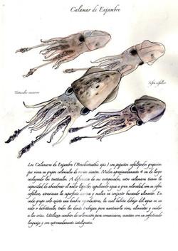 Calamar de Enjambre