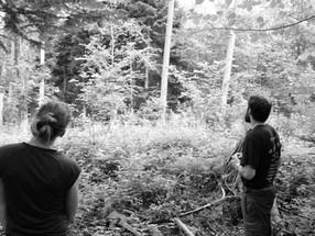 Holzauswahl im Jolimont