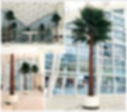 washingtonia palm.jpg