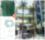 pheonix palm.jpg
