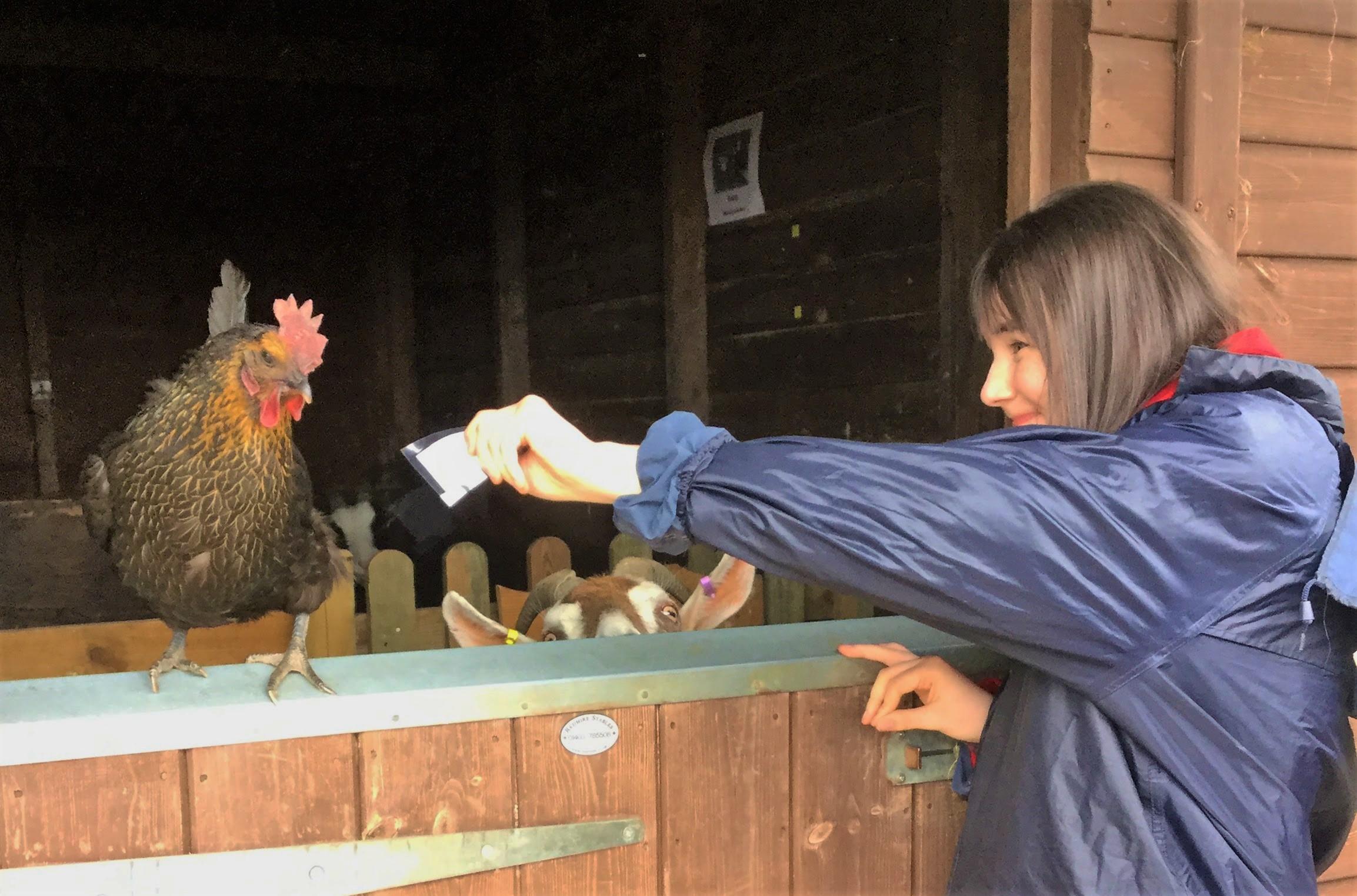 Chicken on door