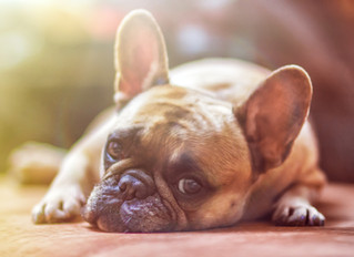 Kennel Cough Revealed