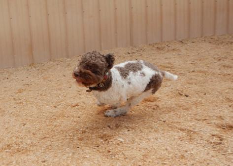 Rosie Loves Running!