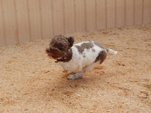 Puppy Prodigy, Semester 3