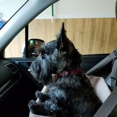 Wallace Braveheart likes to navigate on the way to The Pet Campus!