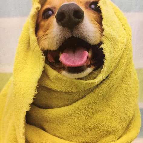 The Pet Campus Paw Spa