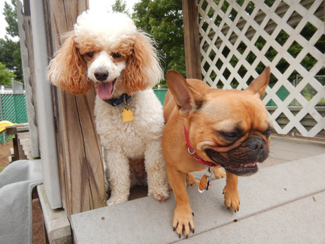 Sophie and Mable Cakes love Daycare!