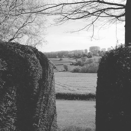 #taxusbaccata #hedge #roundededges #quercuspalustris #landscape #nature