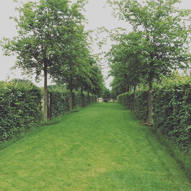 #privategarden #oneyearafterplanting #garden #landscape #nature #landscapearchitecture #lawn #avenueoftrees #fagussylvatica #fagushedge #hed