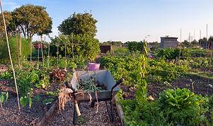 jardins-communautaires.jpg