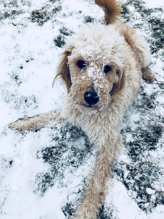 At least someone is enjoying the snow!