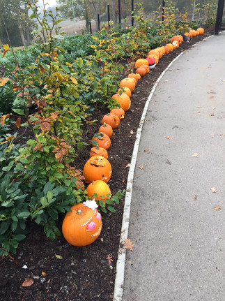 Pumpkin Fever at JLA