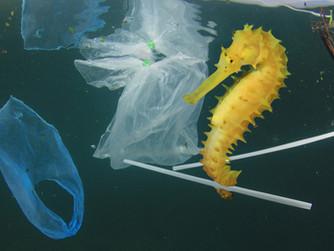 Plástico en el Océano / Viernes de Pequeños Cambios