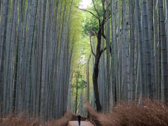 """Bambú el """"Perfect Fit"""" // Viernes de Pequeños Cambios"""