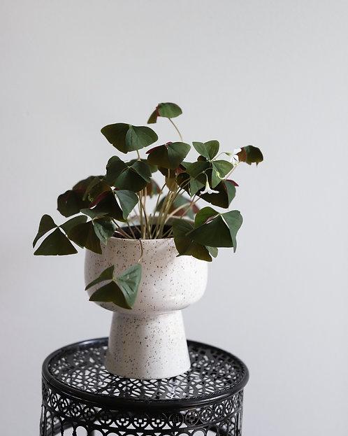 Pedestal Pot