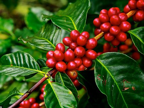 100% Kona Peaberry Coffee