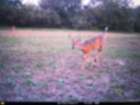 deer,hunt,indiana,buck,outfitter,hunting,archery,midwest