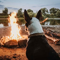 Dog Enjoying Campfire