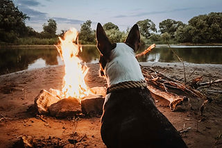 Hund, der Lagerfeuer genießt