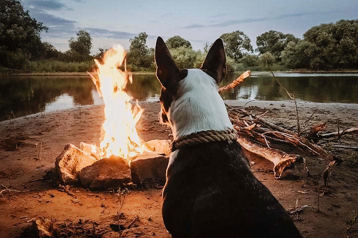 キャンプファイヤーを楽しむ犬