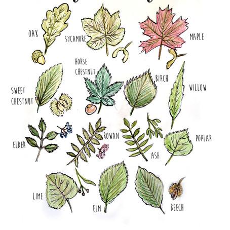 Handy leaf identifier