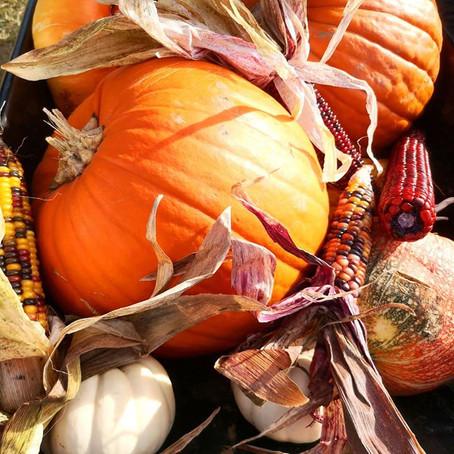 Pumpkin Picking at Beluncle Farm
