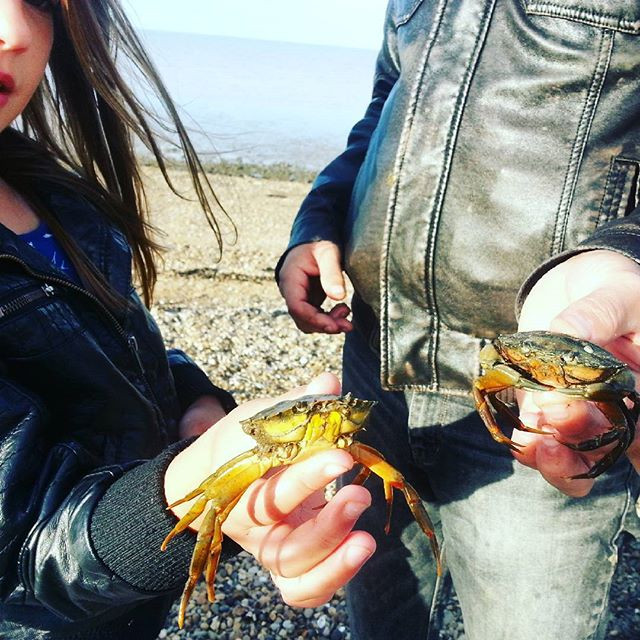 crabs at Minster beach
