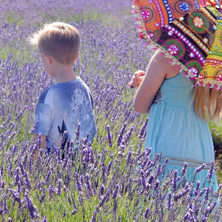 Back to the lavender fields