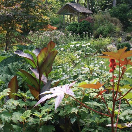 Tea in the Japanese Garden