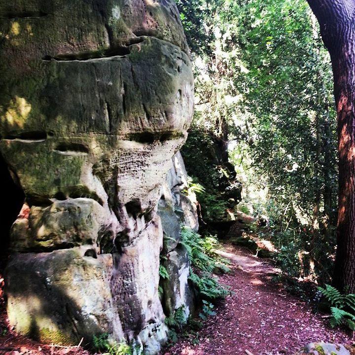 Rock formations Friezland wood Kent