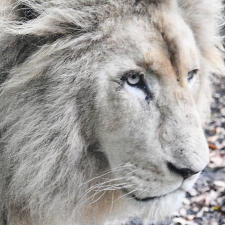 Paradise Wildlife Park review