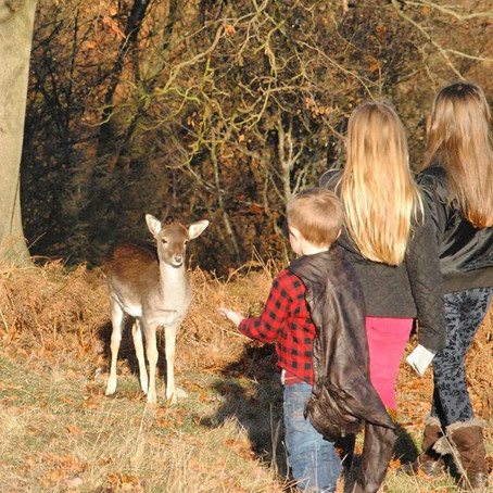 Knole Deer Park