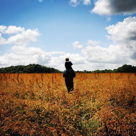 Hunting for Rainbow Fields - Orange