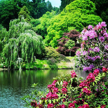 Sheffield Park Gardens review