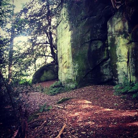 Exploring Friezland Woods